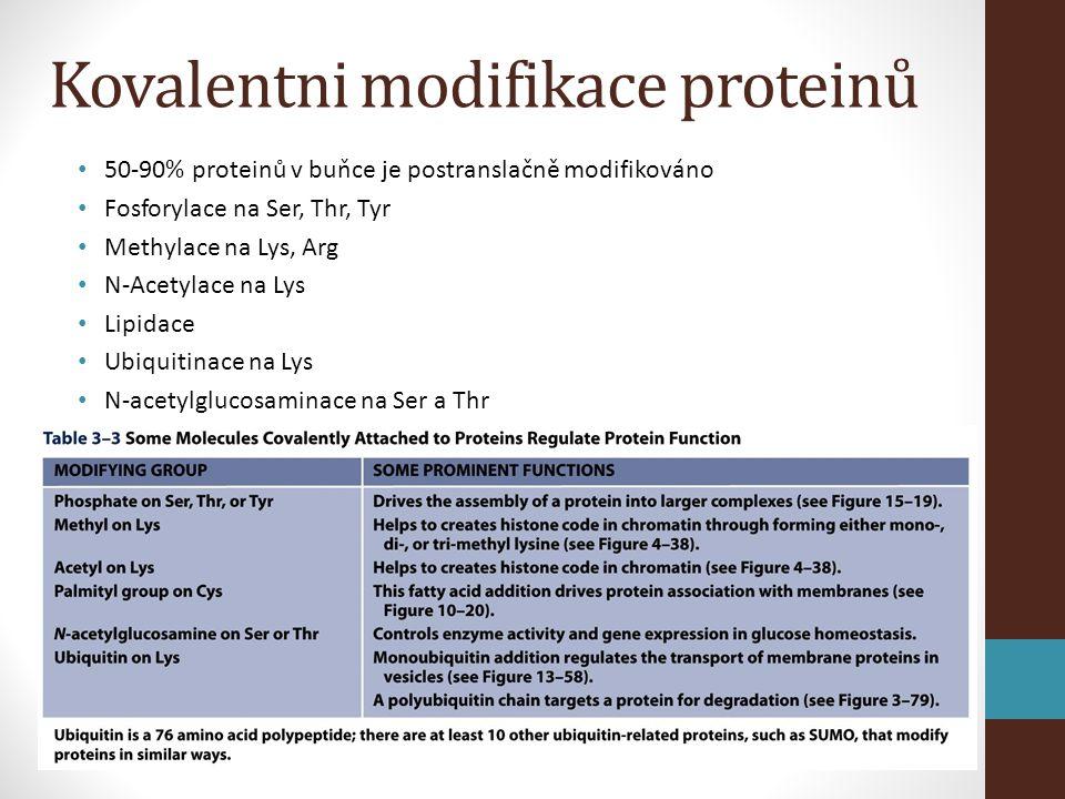 Kovalentni modifikace proteinů • 50-90% proteinů v buňce je postranslačně modifikováno • Fosforylace na Ser, Thr, Tyr • Methylace na Lys, Arg • N-Acetylace na Lys • Lipidace • Ubiquitinace na Lys • N-acetylglucosaminace na Ser a Thr
