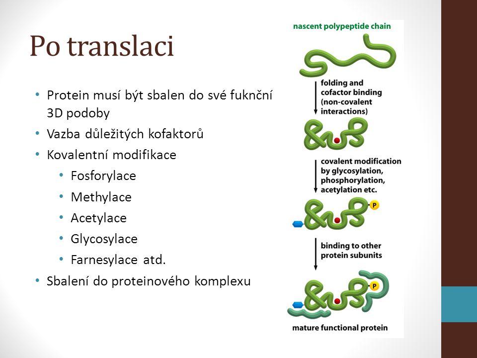 Po translaci • Protein musí být sbalen do své fuknční 3D podoby • Vazba důležitých kofaktorů • Kovalentní modifikace • Fosforylace • Methylace • Acetylace • Glycosylace • Farnesylace atd.