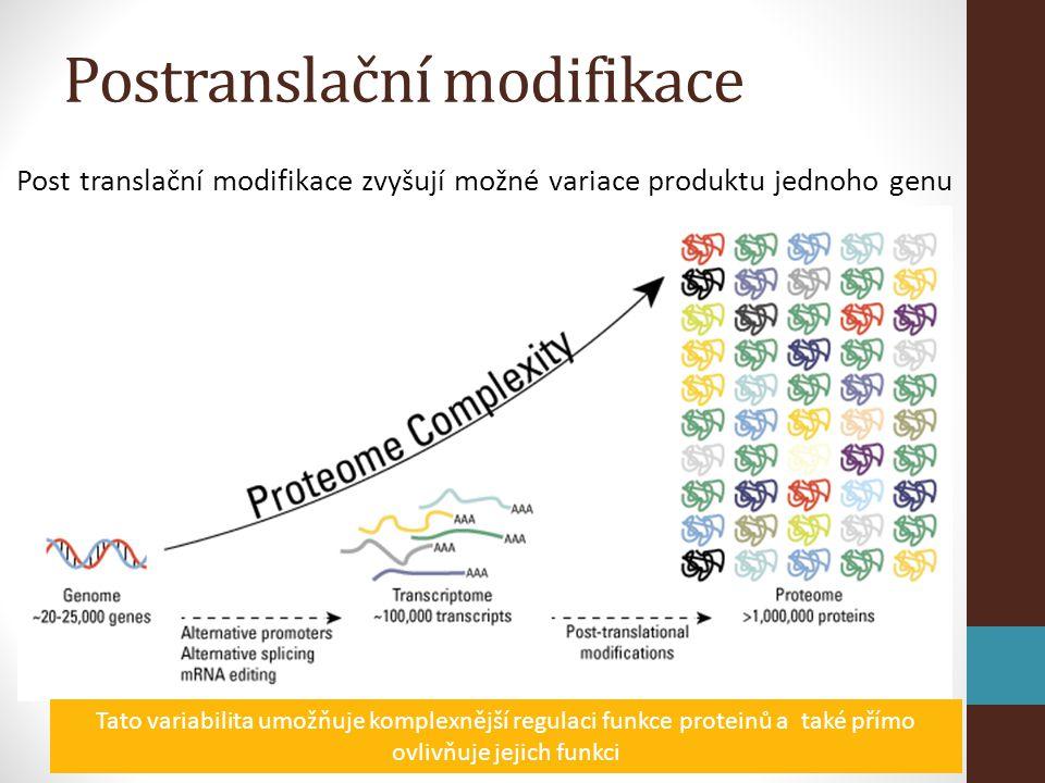 Post translační modifikace zvyšují možné variace produktu jednoho genu Tato variabilita umožňuje komplexnější regulaci funkce proteinů a také přímo ovlivňuje jejich funkci Postranslační modifikace