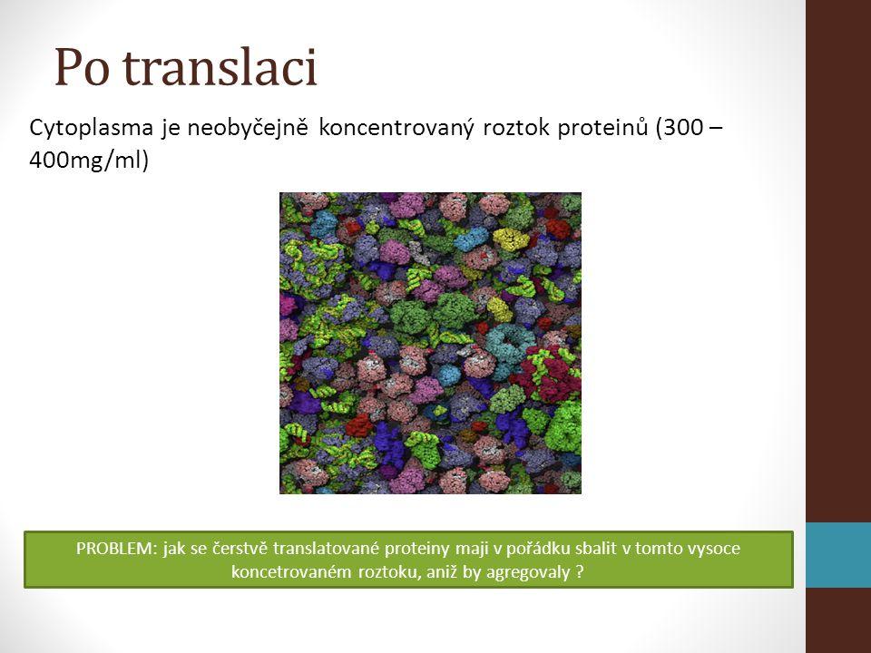 Figure 12-26 Molecular Biology of the Cell (© Garland Science 2008) Přenos proteinu do thylakoidu 1.