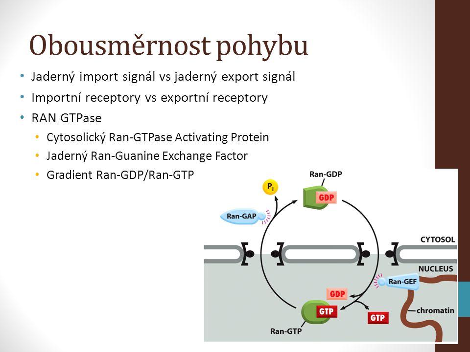 Obousměrnost pohybu • Jaderný import signál vs jaderný export signál • Importní receptory vs exportní receptory • RAN GTPase • Cytosolický Ran-GTPase Activating Protein • Jaderný Ran-Guanine Exchange Factor • Gradient Ran-GDP/Ran-GTP
