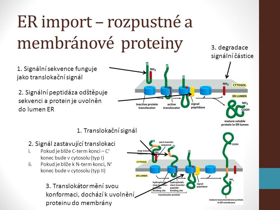ER import – rozpustné a membránové proteiny 1.