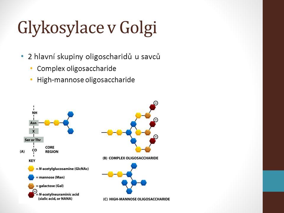• 2 hlavní skupiny oligoscharidů u savců • Complex oligosaccharide • High-mannose oligosaccharide Glykosylace v Golgi