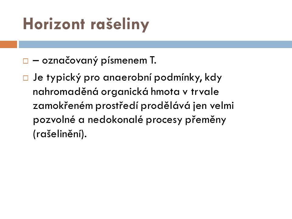 Horizont rašeliny  – označovaný písmenem T.  Je typický pro anaerobní podmínky, kdy nahromaděná organická hmota v trvale zamokřeném prostředí proděl