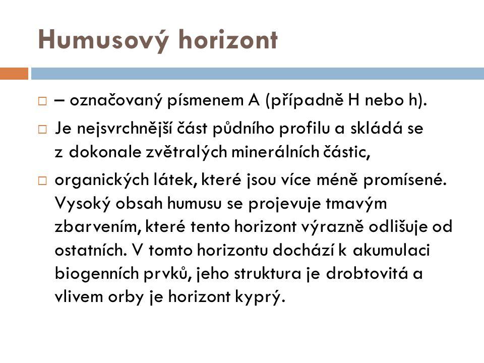 Humusový horizont  – označovaný písmenem A (případně H nebo h).  Je nejsvrchnější část půdního profilu a skládá se z dokonale zvětralých minerálních