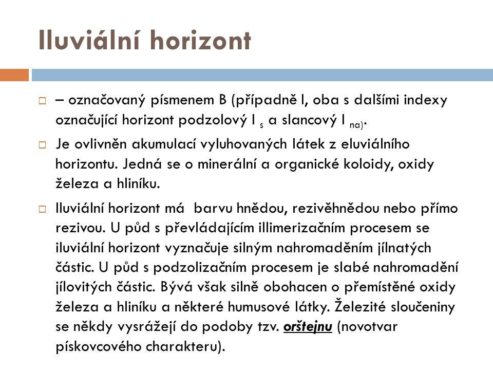 Iluviální horizont  – označovaný písmenem B (případně I, oba s dalšími indexy označující horizont podzolový I s a slancový I na).  Je ovlivněn akumu