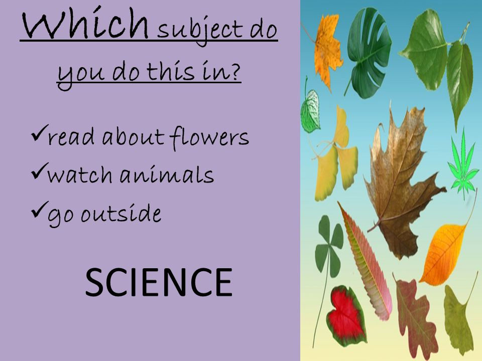 Which subject do you do this in  read about flowers  watch animals  go outside SCIENCE