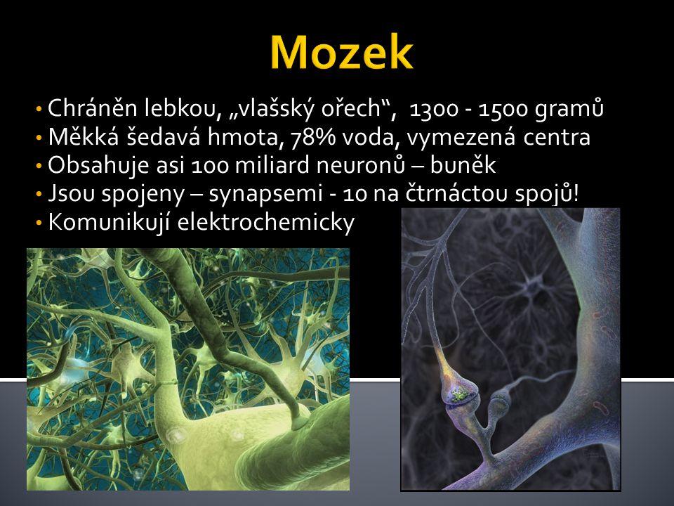 """• Chráněn lebkou, """"vlašský ořech , 1300 - 1500 gramů • Měkká šedavá hmota, 78% voda, vymezená centra • Obsahuje asi 100 miliard neuronů – buněk • Jsou spojeny – synapsemi - 10 na čtrnáctou spojů."""