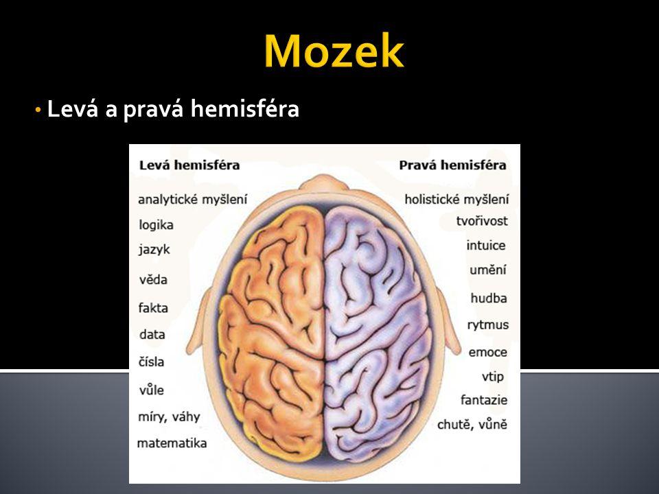 • Levá a pravá hemisféra