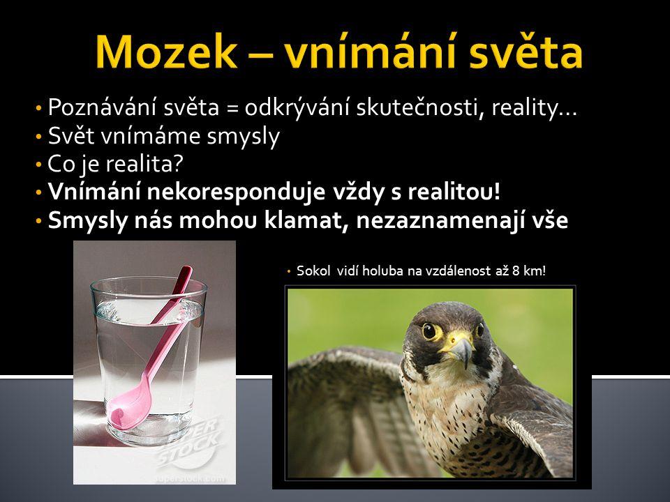 • Poznávání světa = odkrývání skutečnosti, reality… • Svět vnímáme smysly • Co je realita? • Vnímání nekoresponduje vždy s realitou! • Smysly nás moho