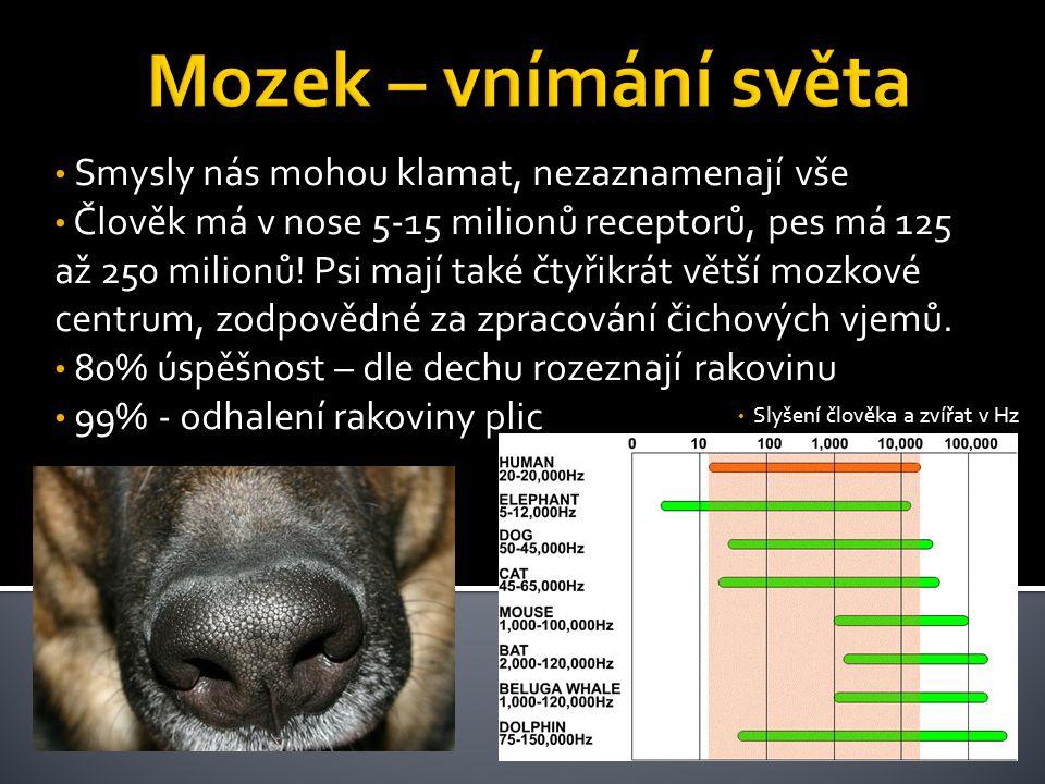 • Smysly nás mohou klamat, nezaznamenají vše • Člověk má v nose 5-15 milionů receptorů, pes má 125 až 250 milionů! Psi mají také čtyřikrát větší mozko