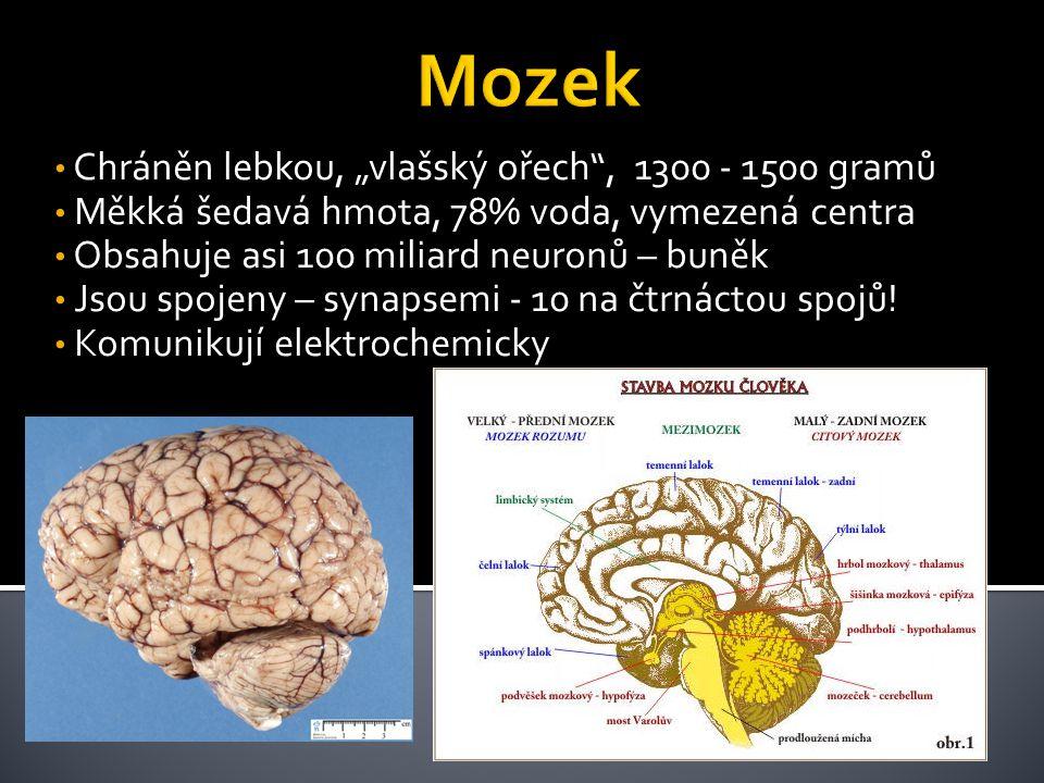 """• Chráněn lebkou, """"vlašský ořech"""", 1300 - 1500 gramů • Měkká šedavá hmota, 78% voda, vymezená centra • Obsahuje asi 100 miliard neuronů – buněk • Jsou"""
