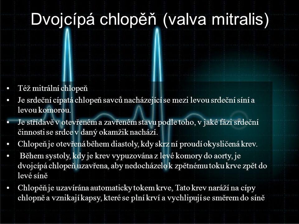 Dvojcípá chlopěň (valva mitralis) •Též mitrální chlopeň •Je srdeční cípatá chlopeň savců nacházející se mezi levou srdeční síní a levou komorou. •Je s