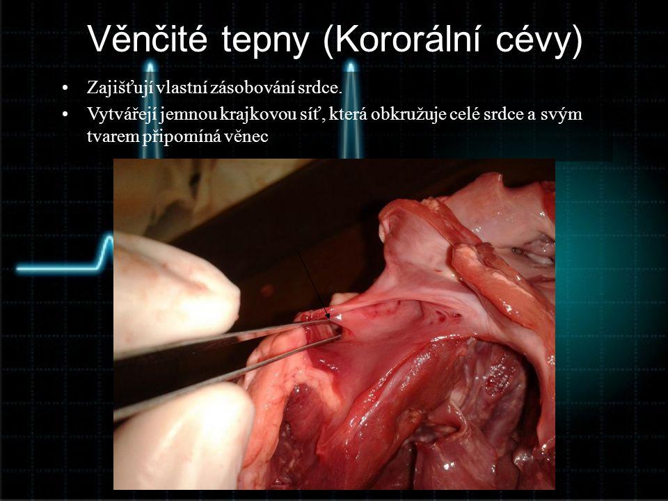 Věnčité tepny (Kororální cévy) •Zajišťují vlastní zásobování srdce. •Vytvářejí jemnou krajkovou síť, která obkružuje celé srdce a svým tvarem připomín