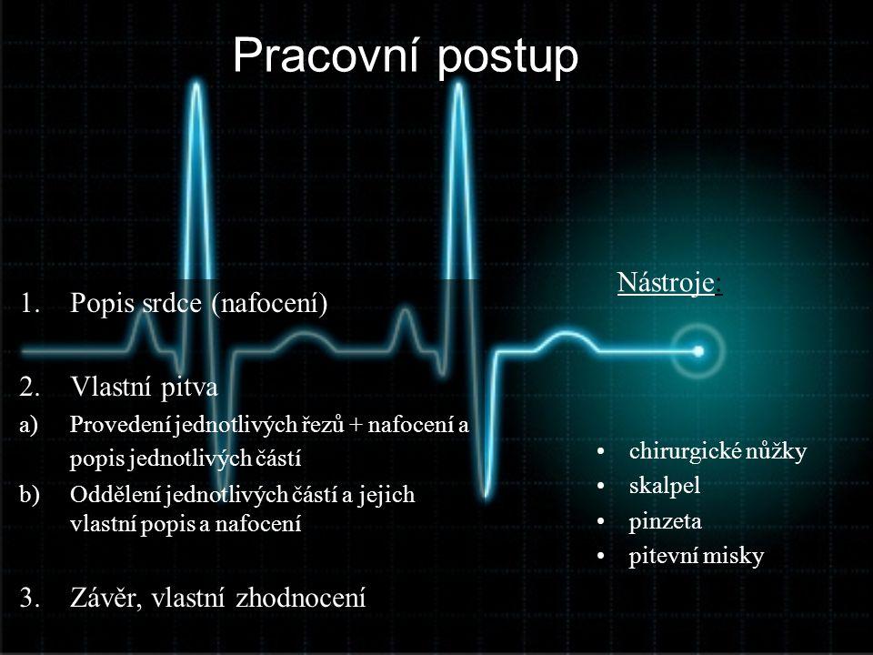 Pracovní postup 1.Popis srdce (nafocení) 2.Vlastní pitva a)Provedení jednotlivých řezů + nafocení a popis jednotlivých částí b)Oddělení jednotlivých č