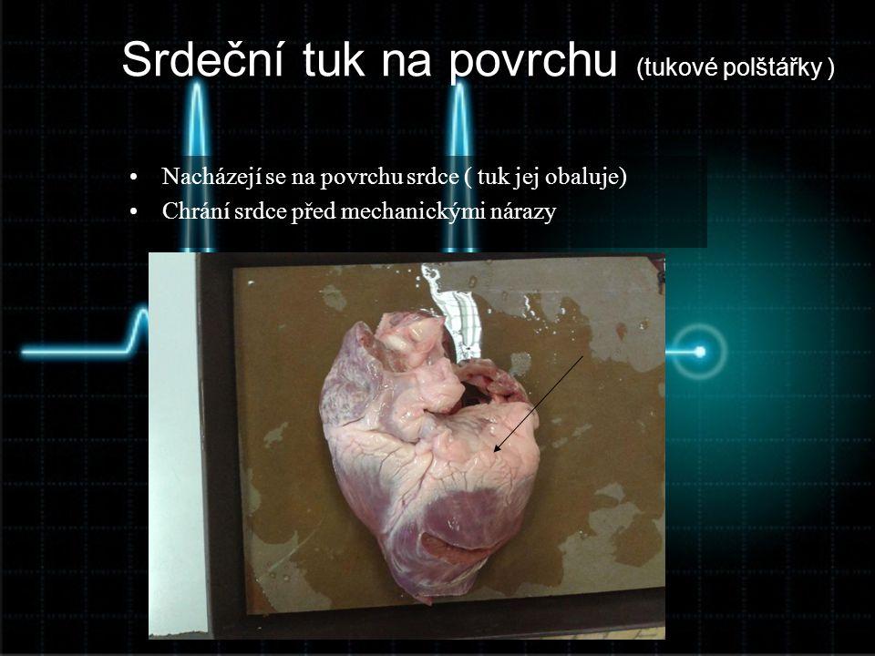 Srdeční tuk na povrchu (tukové polštářky ) •Nacházejí se na povrchu srdce ( tuk jej obaluje) •Chrání srdce před mechanickými nárazy