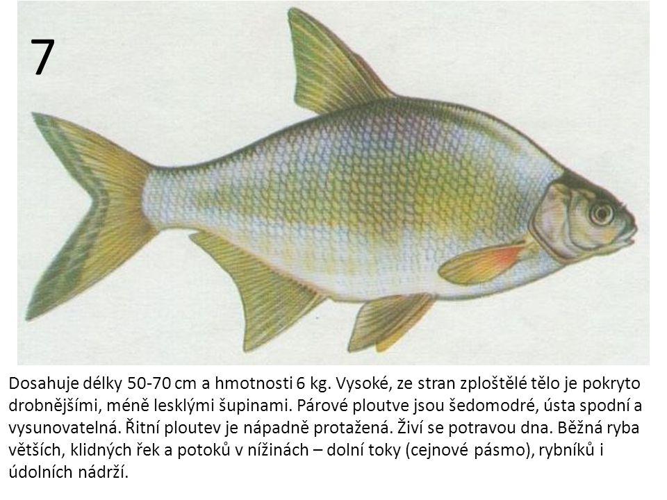 Dosahuje délky 50-70 cm a hmotnosti 6 kg.