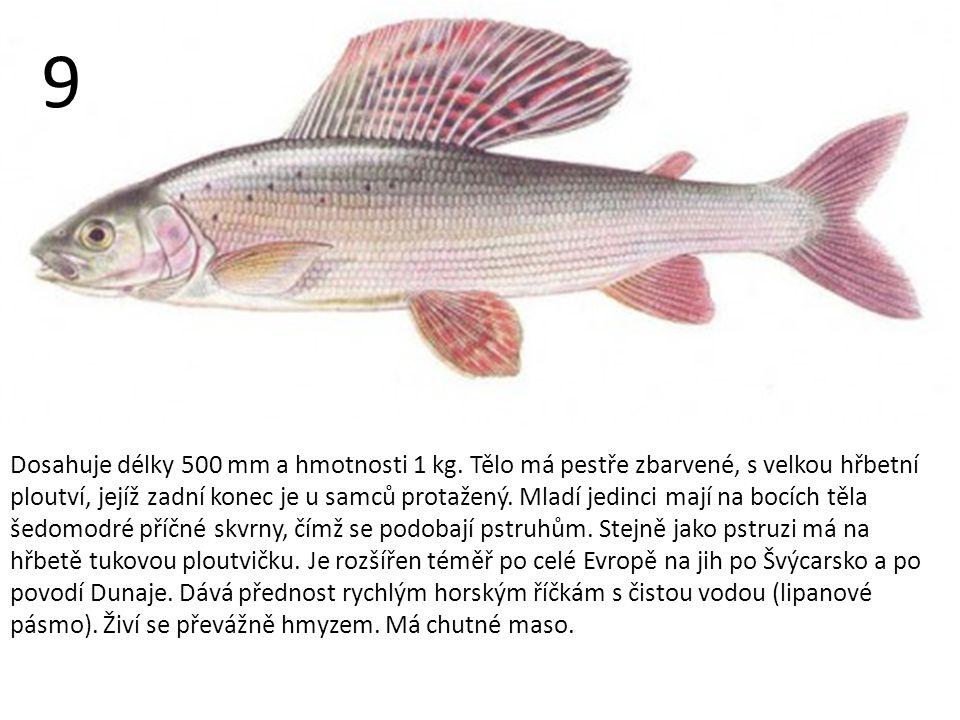 Dosahuje délky 500 mm a hmotnosti 1 kg.