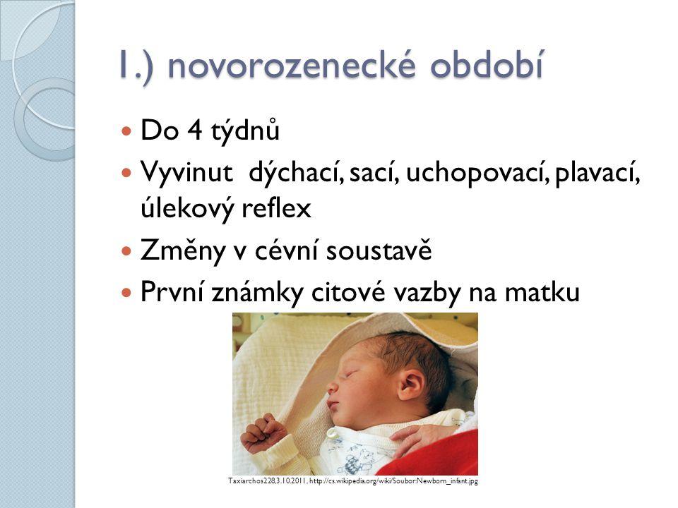 2.) kojenecké období  Do konce 1.
