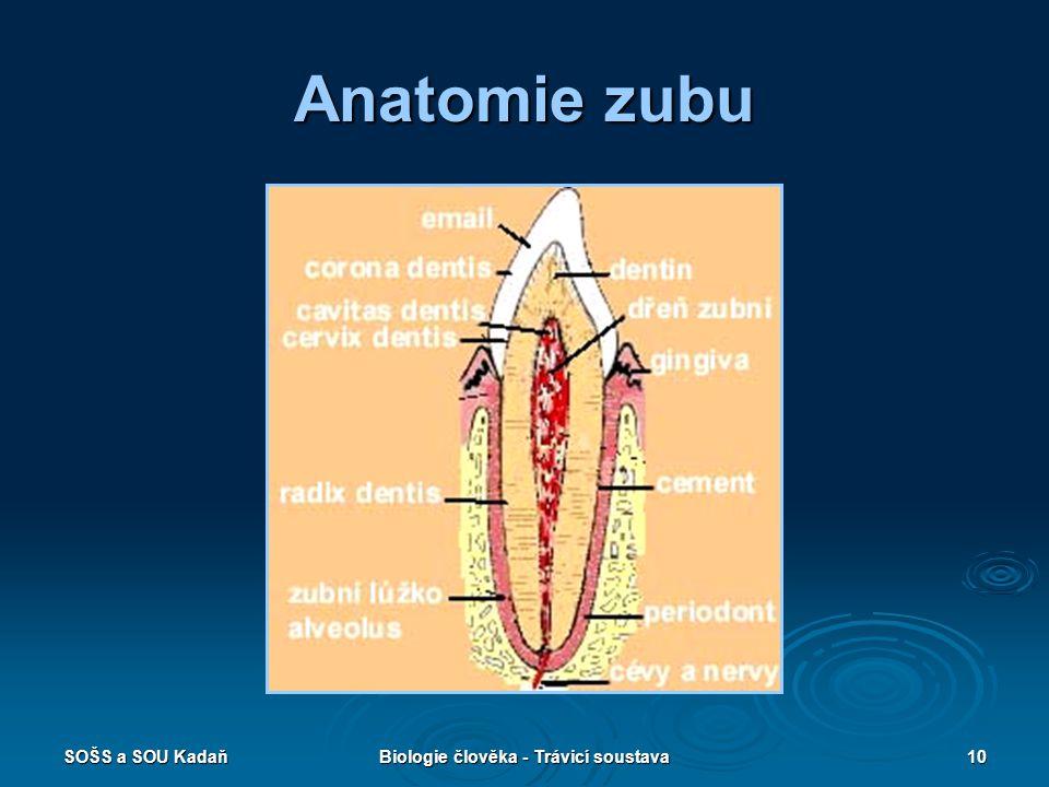 SOŠS a SOU KadaňBiologie člověka - Trávicí soustava10 Anatomie zubu