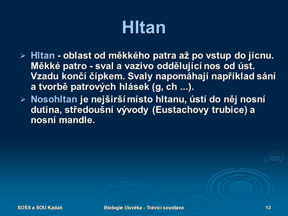 SOŠS a SOU KadaňBiologie člověka - Trávicí soustava13 Hltan  Hltan - oblast od měkkého patra až po vstup do jícnu.