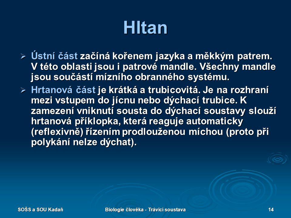 SOŠS a SOU KadaňBiologie člověka - Trávicí soustava14 Hltan  Ústní část začíná kořenem jazyka a měkkým patrem.