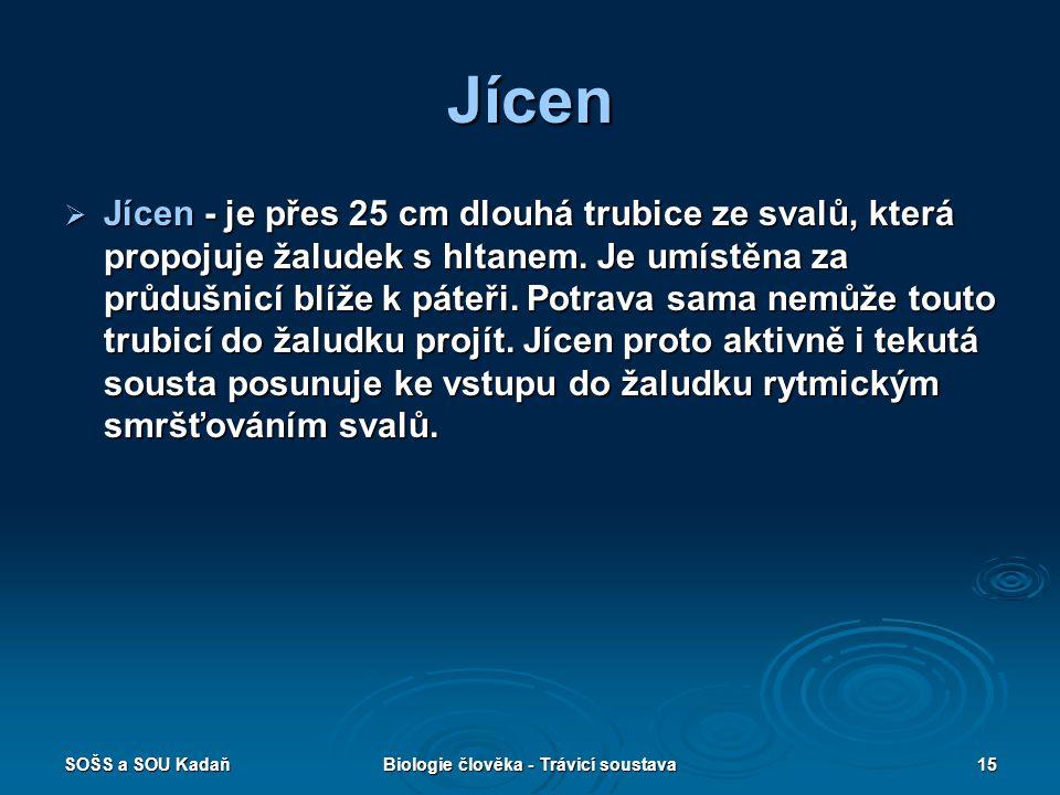 SOŠS a SOU KadaňBiologie člověka - Trávicí soustava15 Jícen  Jícen - je přes 25 cm dlouhá trubice ze svalů, která propojuje žaludek s hltanem.