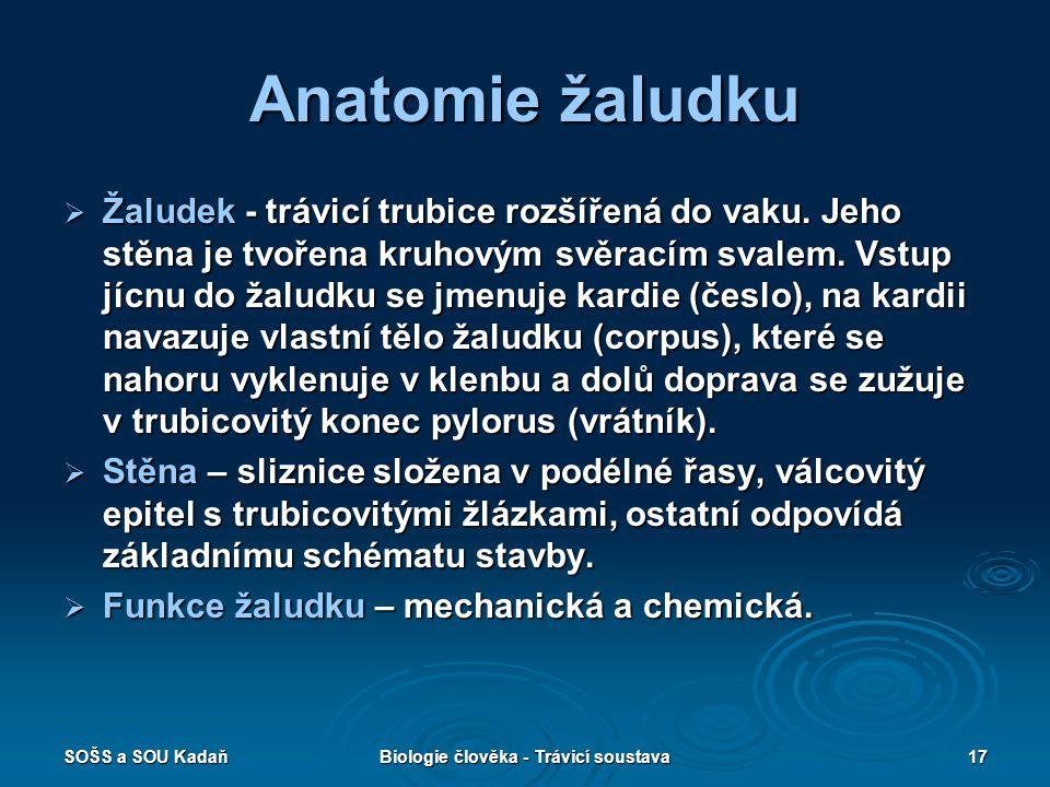 SOŠS a SOU KadaňBiologie člověka - Trávicí soustava17 Anatomie žaludku  Žaludek - trávicí trubice rozšířená do vaku.