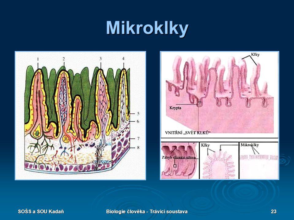 SOŠS a SOU KadaňBiologie člověka - Trávicí soustava23 Mikroklky