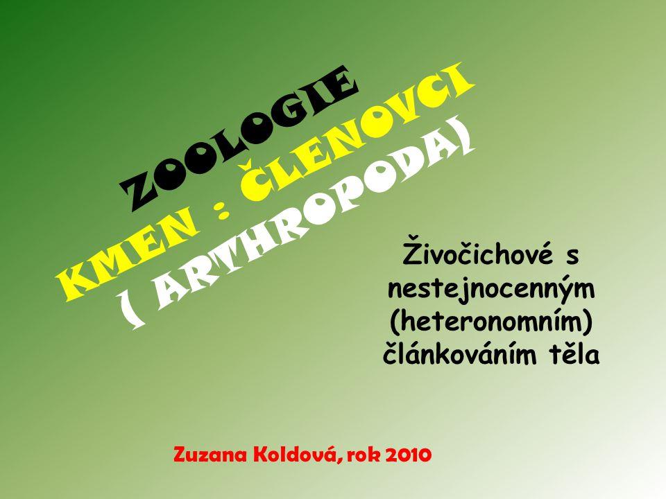 ZOOLOGIE KMEN : ČLENOVCI ( ARTHROPODA) Živočichové s nestejnocenným (heteronomním) článkováním těla Zuzana Koldová, rok 2010