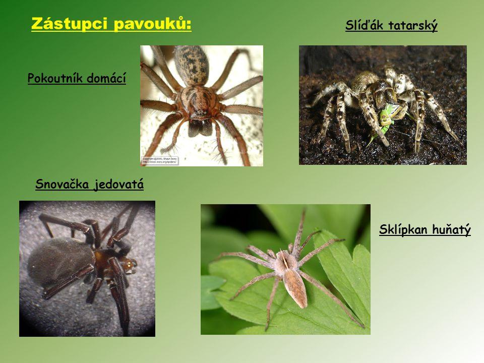 Pokoutník domácí Slíďák tatarský Sklípkan huňatý Snovačka jedovatá Zástupci pavouků: