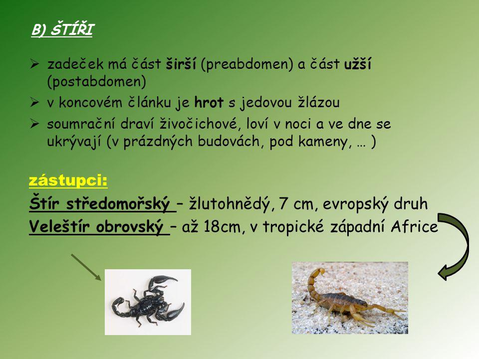 B) ŠTÍŘI  zadeček má část širší (preabdomen) a část užší (postabdomen)  v koncovém článku je hrot s jedovou žlázou  soumrační draví živočichové, loví v noci a ve dne se ukrývají (v prázdných budovách, pod kameny, … ) zástupci: Štír středomořský – žlutohnědý, 7 cm, evropský druh Veleštír obrovský – až 18cm, v tropické západní Africe