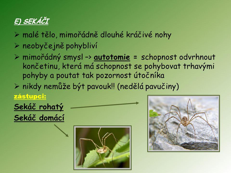 E) SEKÁČI  malé tělo, mimořádně dlouhé kráčivé nohy  neobyčejně pohybliví  mimořádný smysl –> autotomie = schopnost odvrhnout končetinu, která má schopnost se pohybovat trhavými pohyby a poutat tak pozornost útočníka  nikdy nemůže být pavouk!.