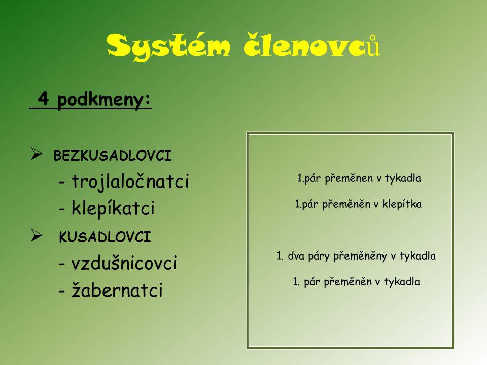 Systém členovc ů 4 podkmeny:  BEZKUSADLOVCI - trojlaločnatci - klepíkatci  KUSADLOVCI - vzdušnicovci - žabernatci