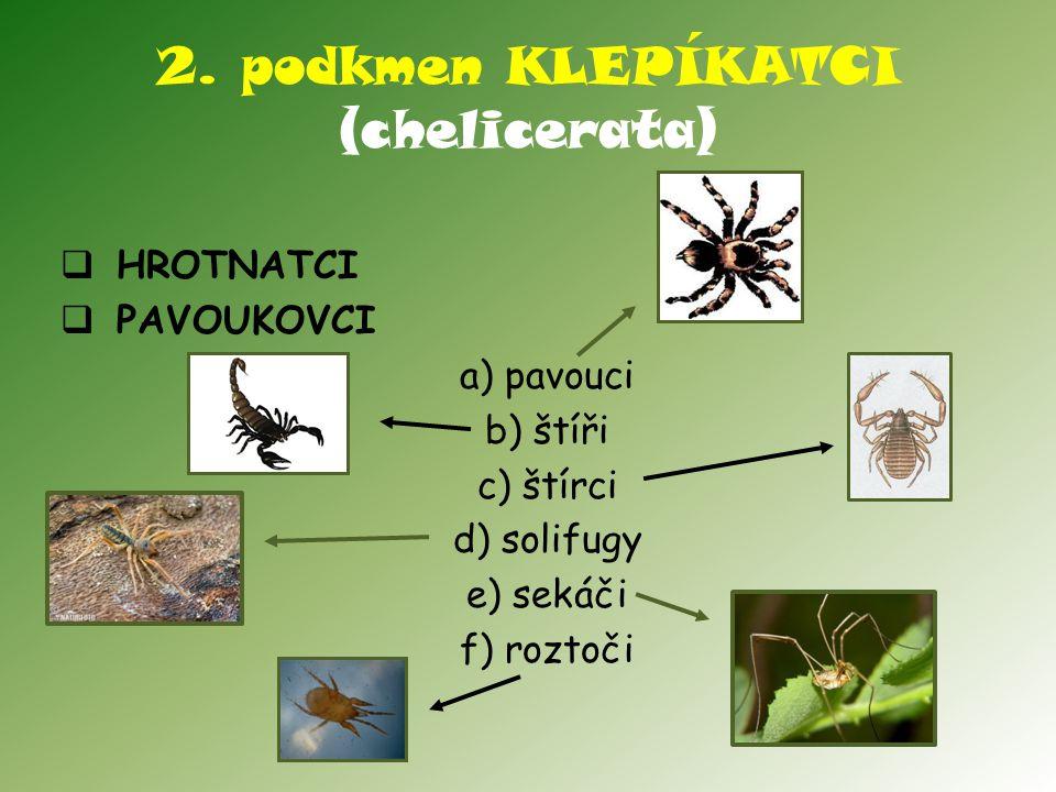 2. podkmen KLEPÍKATCI (chelicerata)  HROTNATCI  PAVOUKOVCI a) pavouci b) štíři c) štírci d) solifugy e) sekáči f) roztoči
