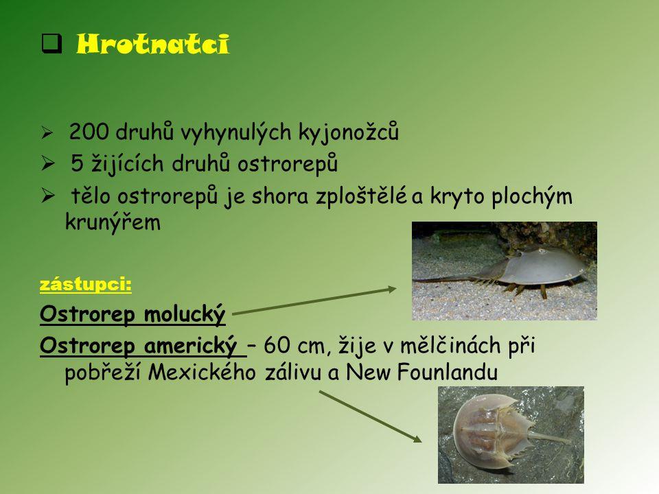  Hrotnatci  200 druhů vyhynulých kyjonožců  5 žijících druhů ostrorepů  tělo ostrorepů je shora zploštělé a kryto plochým krunýřem zástupci: Ostrorep molucký Ostrorep americký – 60 cm, žije v mělčinách při pobřeží Mexického zálivu a New Founlandu