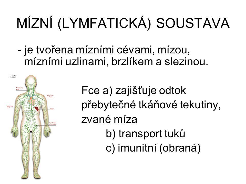 MÍZNÍ (LYMFATICKÁ) SOUSTAVA - je tvořena mízními cévami, mízou, mízními uzlinami, brzlíkem a slezinou. Fce a) zajišťuje odtok přebytečné tkáňové tekut