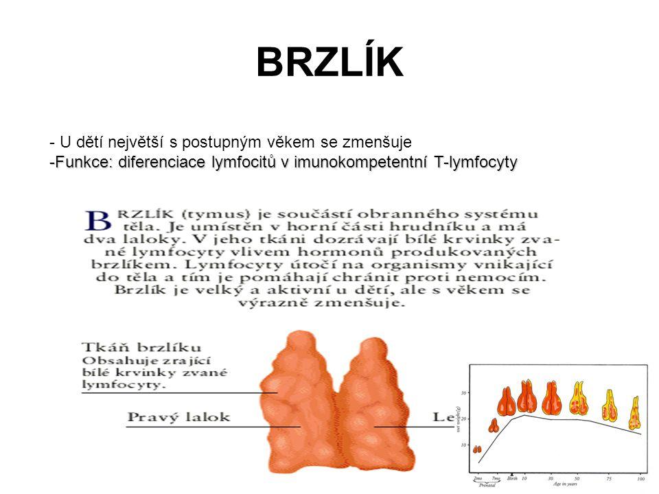 BRZLÍK - U dětí největší s postupným věkem se zmenšuje -Funkce: diferenciace lymfocitů v imunokompetentní T-lymfocyty
