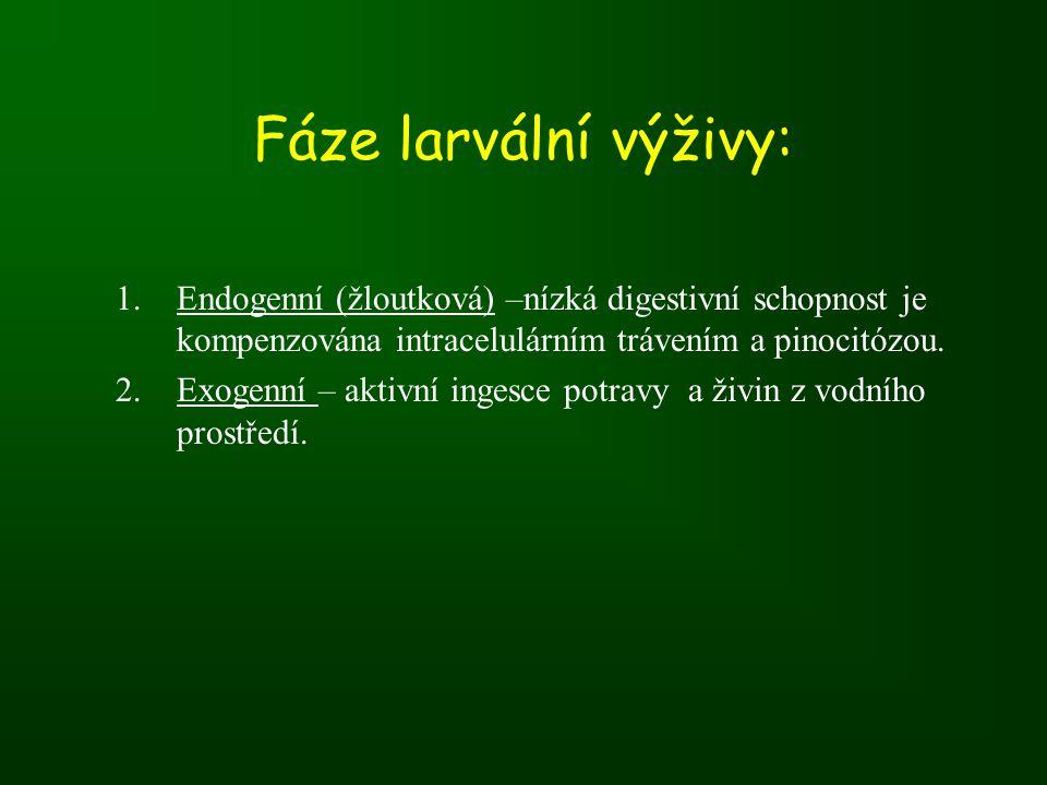 Fáze larvální výživy: 1.Endogenní (žloutková) –nízká digestivní schopnost je kompenzována intracelulárním trávením a pinocitózou.