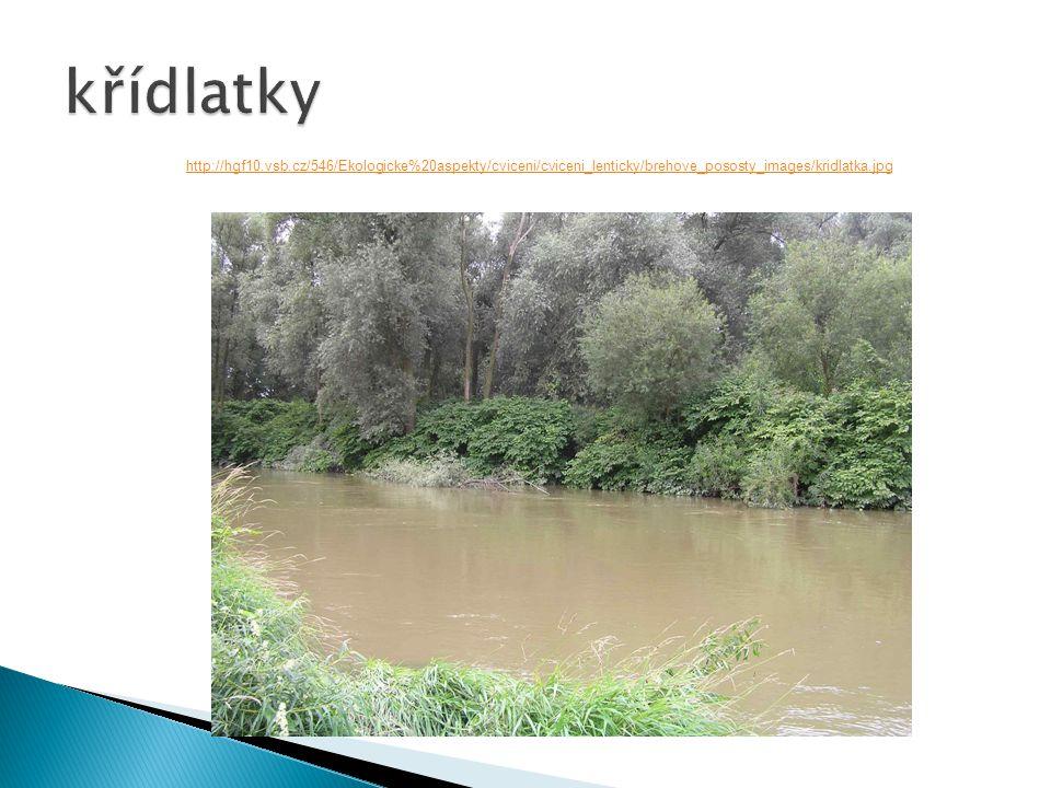 http://hgf10.vsb.cz/546/Ekologicke%20aspekty/cviceni/cviceni_lenticky/brehove_pososty_images/kridlatka.jpg