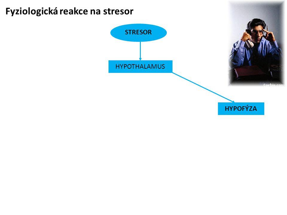 Fyziologická reakce na stresor STRESOR HYPOFÝZA HYPOTHALAMUS