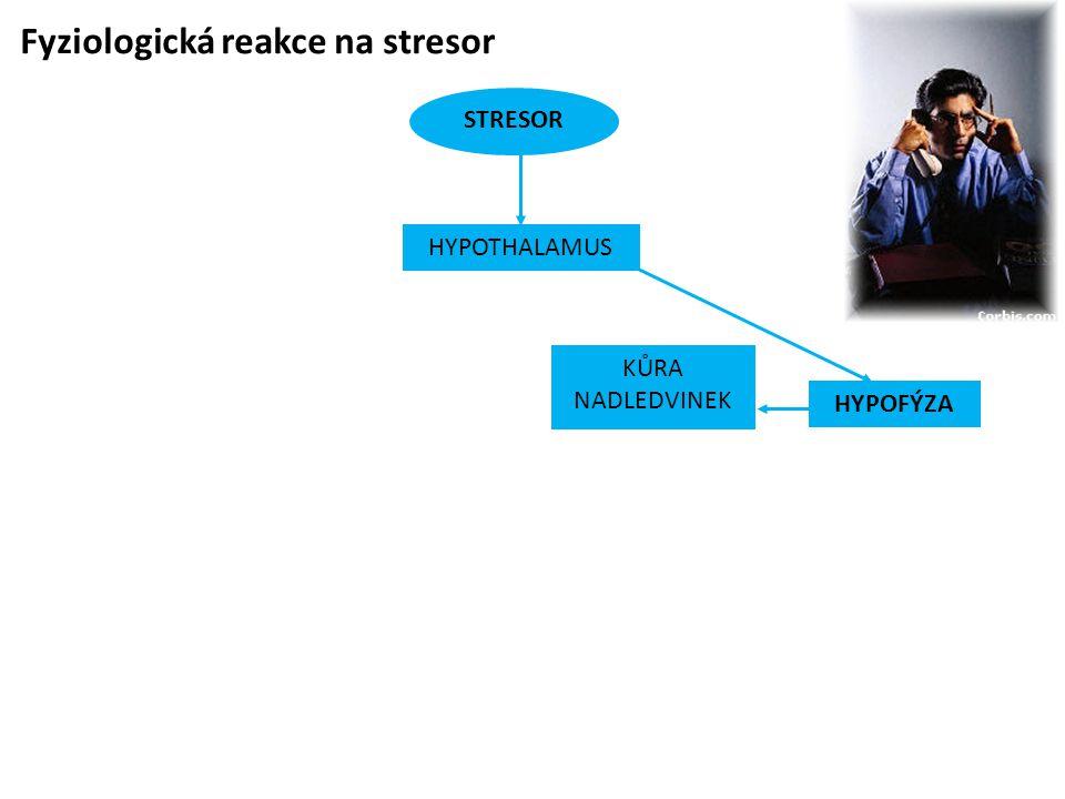 Fyziologická reakce na stresor STRESOR HYPOFÝZA KŮRA NADLEDVINEK HYPOTHALAMUS