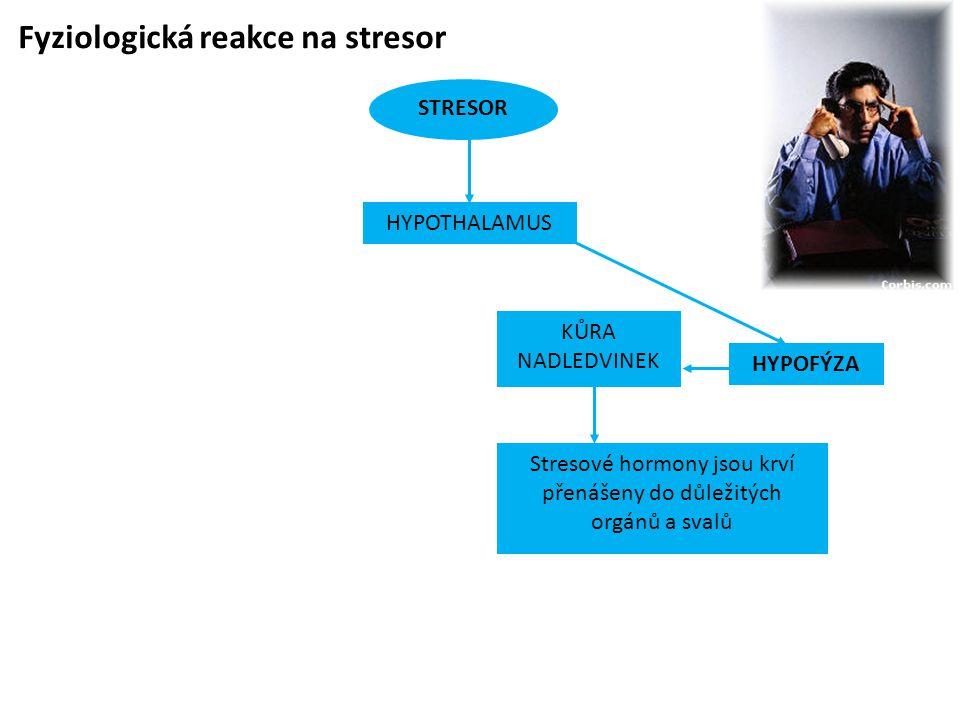Fyziologická reakce na stresor STRESOR HYPOFÝZA KŮRA NADLEDVINEK Stresové hormony jsou krví přenášeny do důležitých orgánů a svalů HYPOTHALAMUS