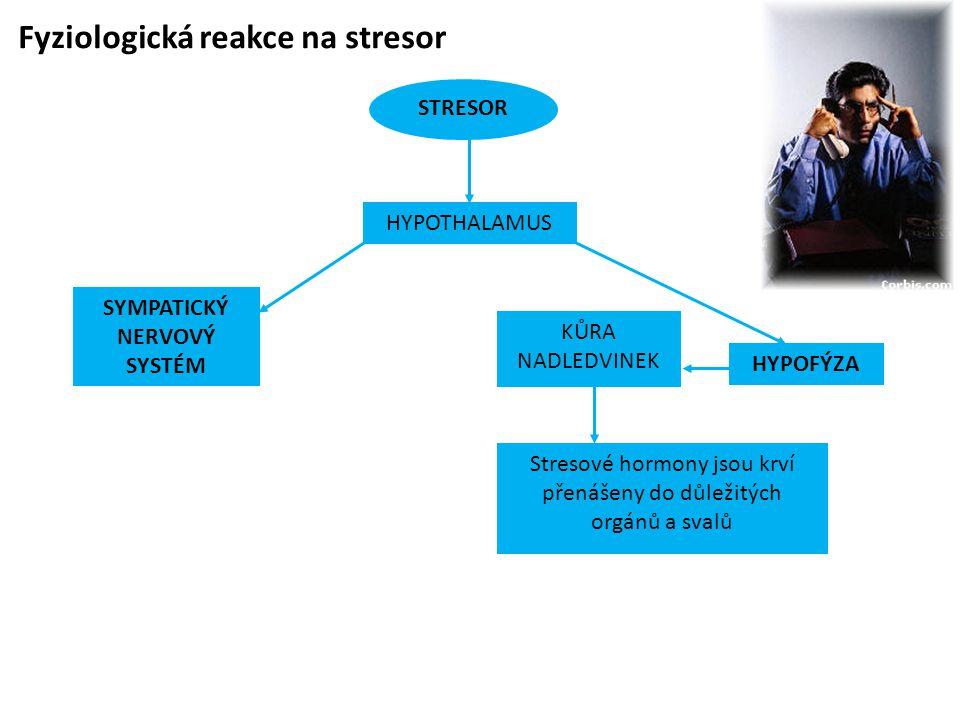 Fyziologická reakce na stresor STRESOR SYMPATICKÝ NERVOVÝ SYSTÉM HYPOFÝZA KŮRA NADLEDVINEK Stresové hormony jsou krví přenášeny do důležitých orgánů a svalů HYPOTHALAMUS