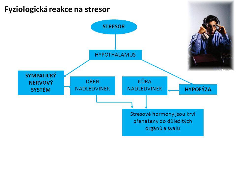 Fyziologická reakce na stresor STRESOR SYMPATICKÝ NERVOVÝ SYSTÉM HYPOFÝZA KŮRA NADLEDVINEK Stresové hormony jsou krví přenášeny do důležitých orgánů a svalů DŘEŇ NADLEDVINEK HYPOTHALAMUS