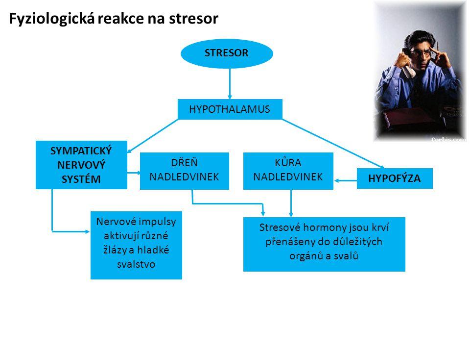 Fyziologická reakce na stresor STRESOR SYMPATICKÝ NERVOVÝ SYSTÉM HYPOFÝZA Nervové impulsy aktivují různé žlázy a hladké svalstvo KŮRA NADLEDVINEK Stre