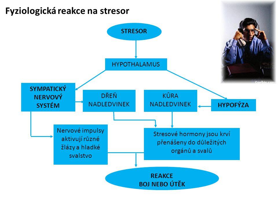 Fyziologická reakce na stresor STRESOR SYMPATICKÝ NERVOVÝ SYSTÉM HYPOFÝZA Nervové impulsy aktivují různé žlázy a hladké svalstvo KŮRA NADLEDVINEK Stresové hormony jsou krví přenášeny do důležitých orgánů a svalů DŘEŇ NADLEDVINEK HYPOTHALAMUS REAKCE BOJ NEBO ÚTĚK