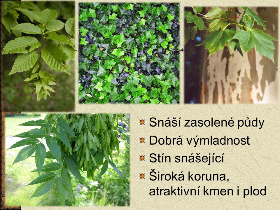 Snáší zasolené půdy Dobrá výmladnost Stín snášející Široká koruna, atraktivní kmen i plod