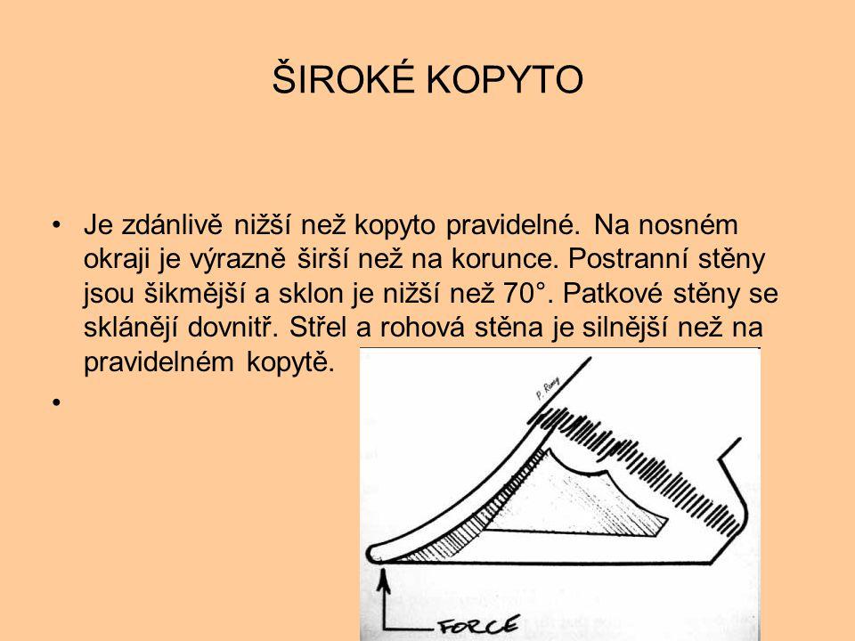 ŠIROKÉ KOPYTO •Je zdánlivě nižší než kopyto pravidelné. Na nosném okraji je výrazně širší než na korunce. Postranní stěny jsou šikmější a sklon je niž