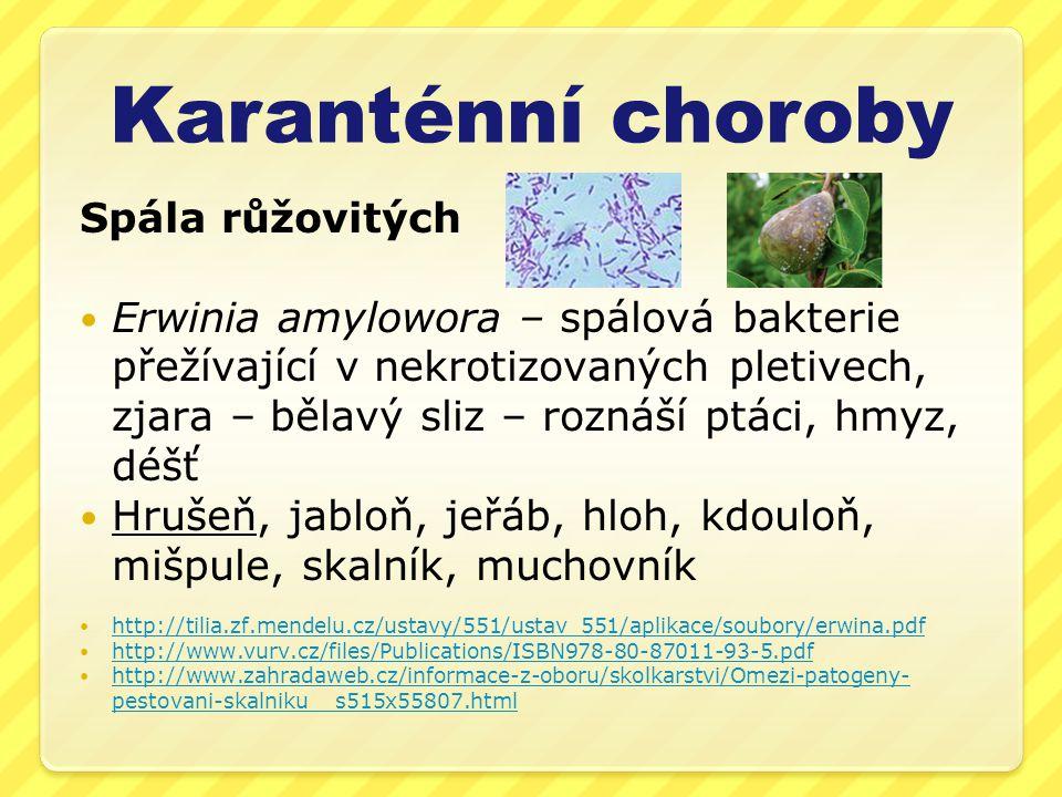 Karanténní choroby Spála růžovitých  Erwinia amylowora – spálová bakterie přežívající v nekrotizovaných pletivech, zjara – bělavý sliz – roznáší ptáci, hmyz, déšť  Hrušeň, jabloň, jeřáb, hloh, kdouloň, mišpule, skalník, muchovník  http://tilia.zf.mendelu.cz/ustavy/551/ustav_551/aplikace/soubory/erwina.pdf http://tilia.zf.mendelu.cz/ustavy/551/ustav_551/aplikace/soubory/erwina.pdf  http://www.vurv.cz/files/Publications/ISBN978-80-87011-93-5.pdf http://www.vurv.cz/files/Publications/ISBN978-80-87011-93-5.pdf  http://www.zahradaweb.cz/informace-z-oboru/skolkarstvi/Omezi-patogeny- pestovani-skalniku__s515x55807.html http://www.zahradaweb.cz/informace-z-oboru/skolkarstvi/Omezi-patogeny- pestovani-skalniku__s515x55807.html